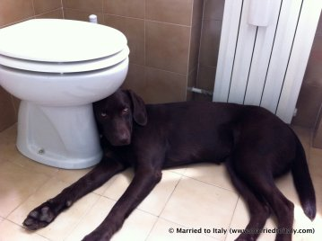 This photo has nothing to do with the post, but my dog is cute... and there's a toilet.