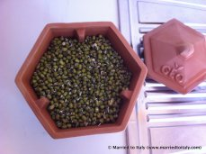 mung beans - day one