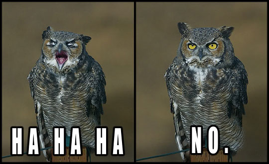 Owl Laugh Hahaha - No