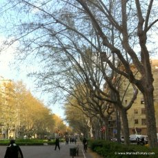 tree lined avenues in Gracia