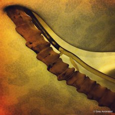 biomimicry in Gaudi staircase - Casa Batllo', Barcelona