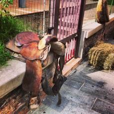 saddle up horsey