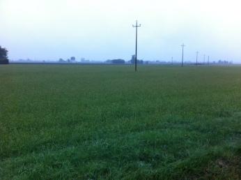 fields in the Bassa